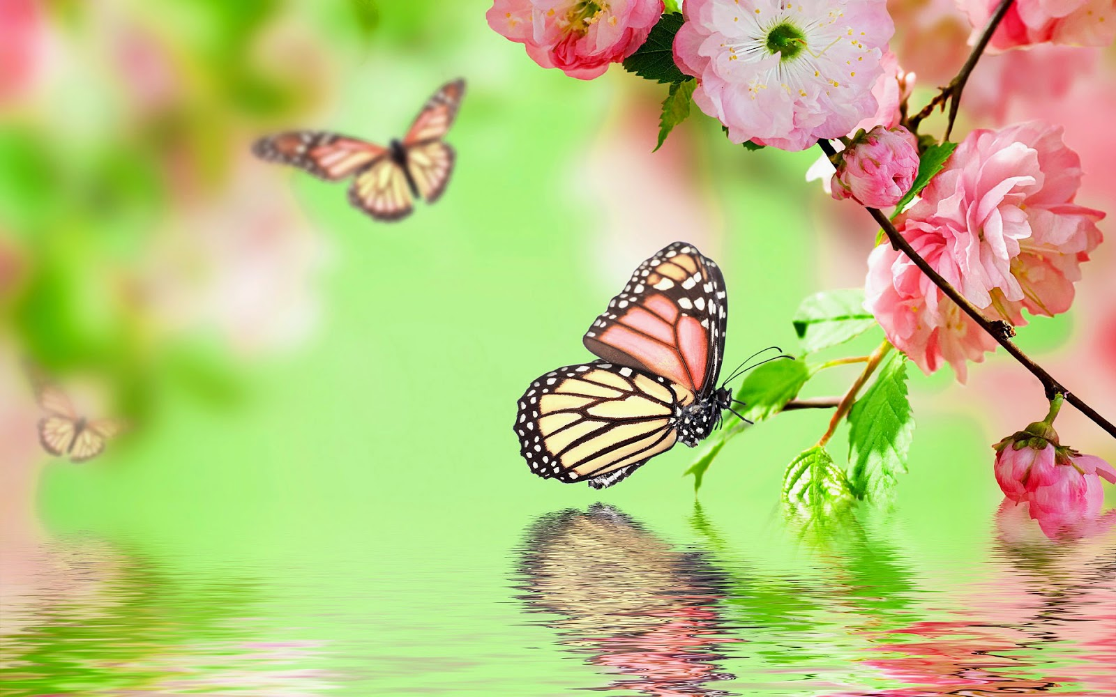 Wallpaper - Beautiful Pictures Of Flowers And Butterflies With , HD Wallpaper & Backgrounds