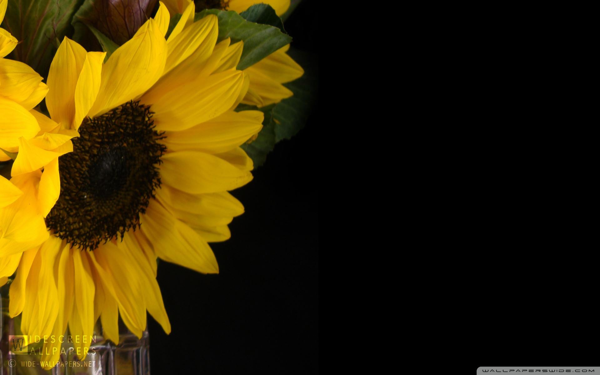 Sunflower Wallpapers Hd Background Desktop Background