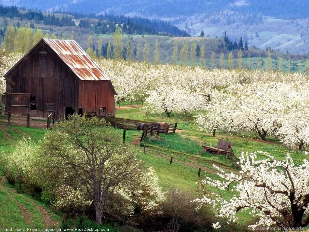 Barn In Spring Time , HD Wallpaper & Backgrounds
