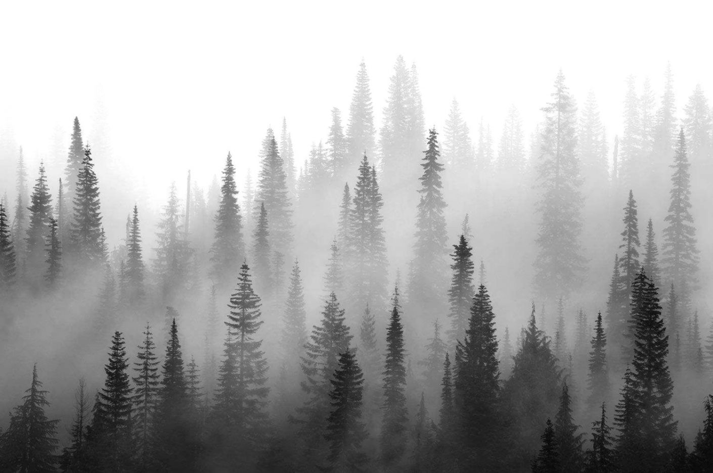 Black And White Misty Forest 2302780 Hd Wallpaper Backgrounds Download