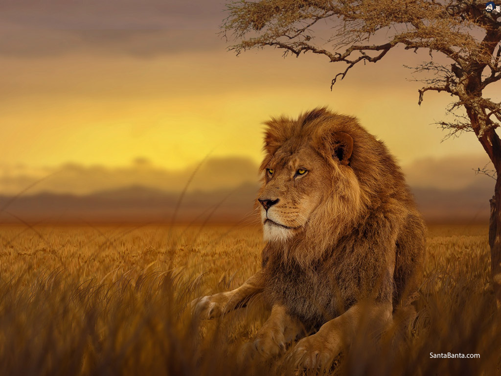 Lion Sitting Under A Tree , HD Wallpaper & Backgrounds