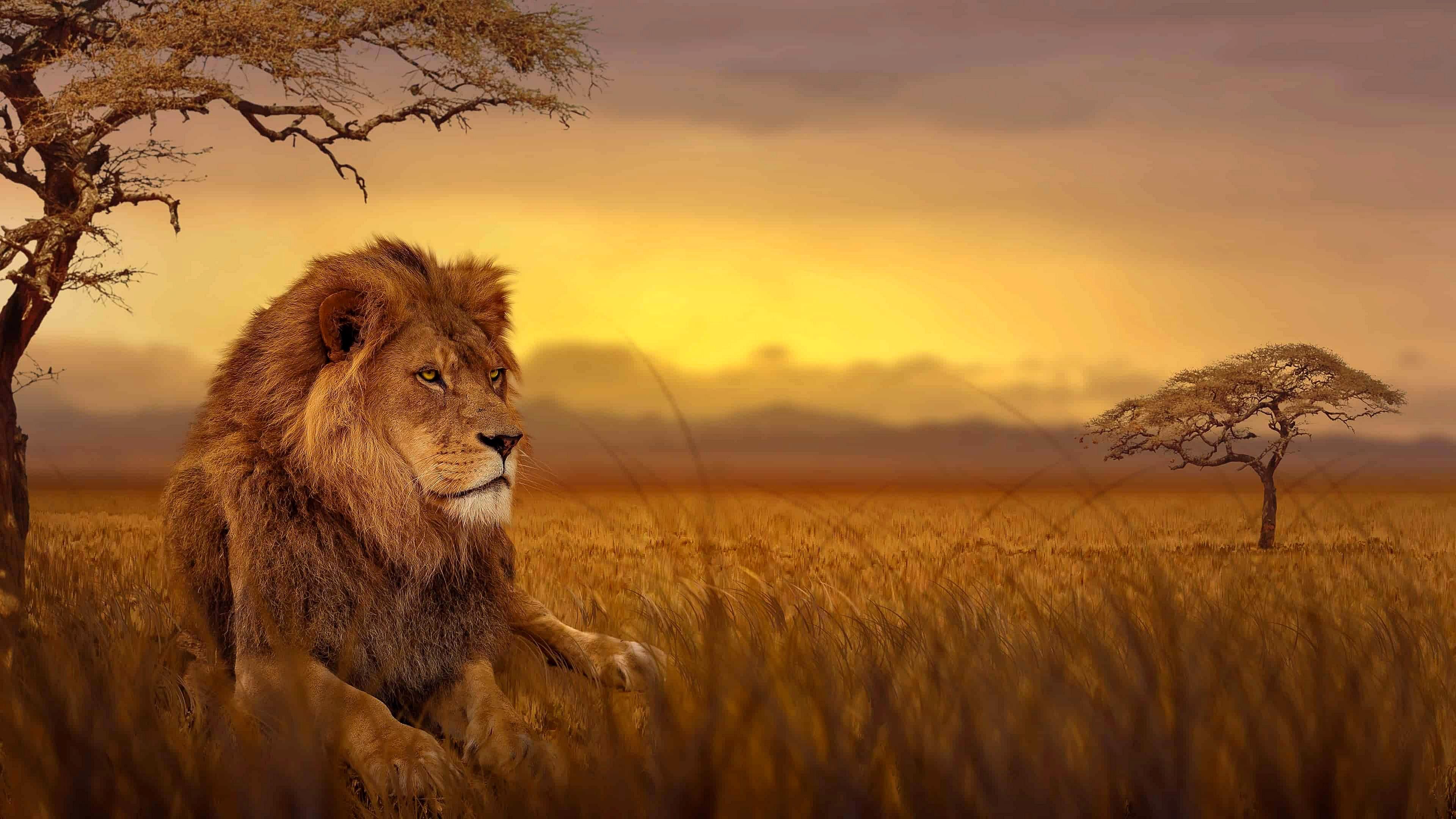 African Savanna , HD Wallpaper & Backgrounds