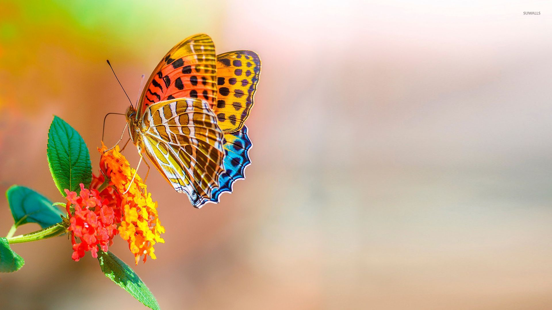 Colorful Butterfly , HD Wallpaper & Backgrounds
