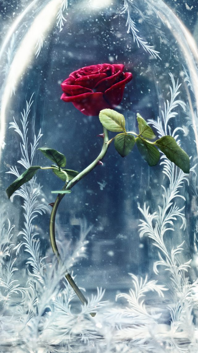 Beauty And The Beast Glass Rose Movie 2310804 Hd