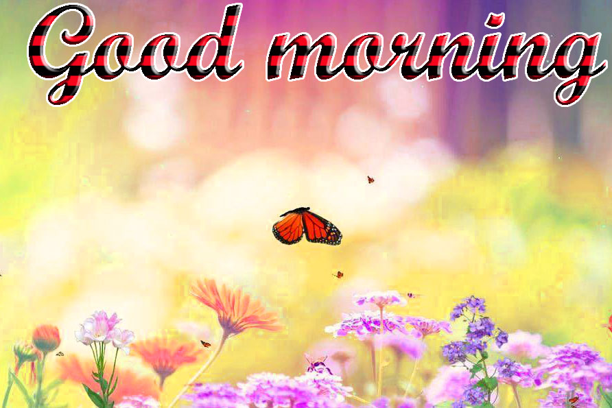 Whatsapp Good Morning 3d 2316549 Hd Wallpaper Backgrounds Download