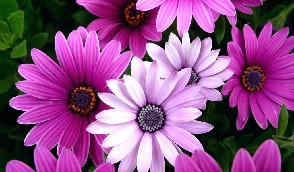Most Beautiful Wallpapers Of Flowers , HD Wallpaper & Backgrounds