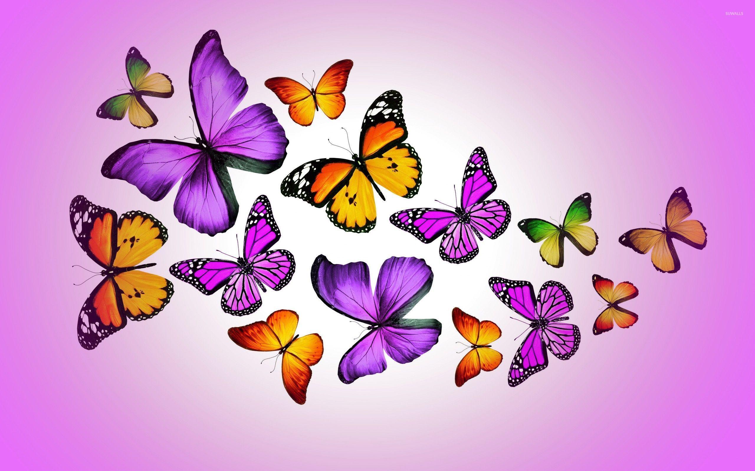 Beautiful Butterflies , HD Wallpaper & Backgrounds