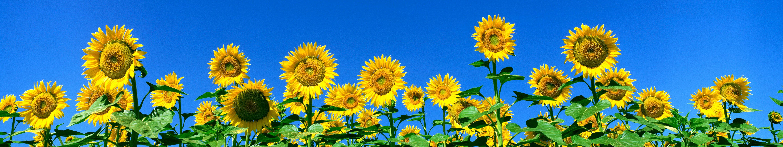 5760 X 1080 Wallpaper Flowers 2352571 Hd Wallpaper