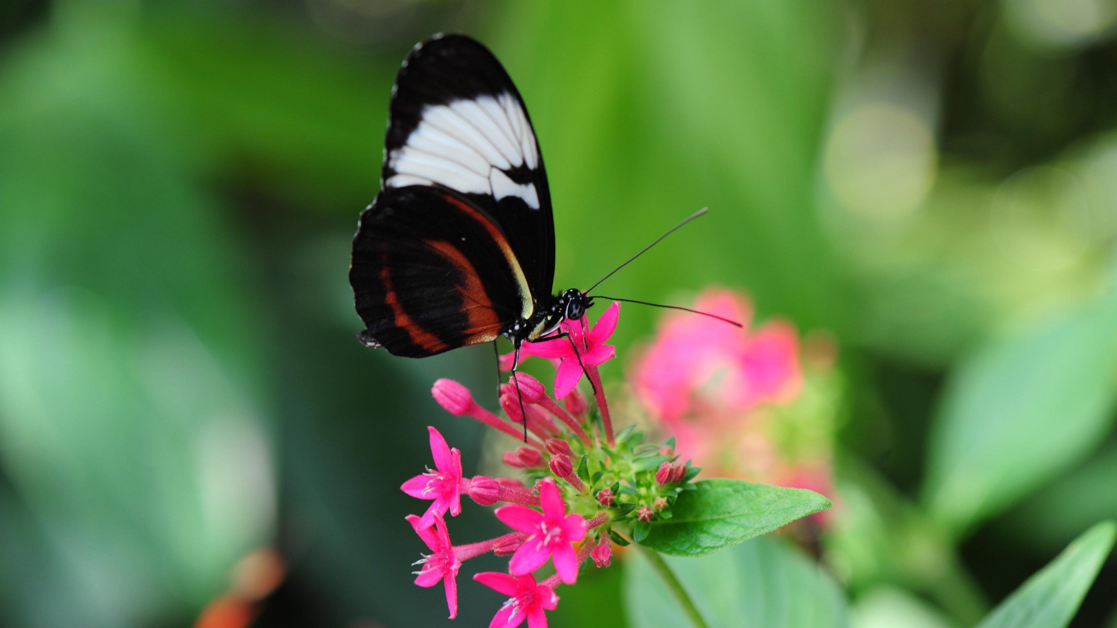 Butterfly Wallpaper Hd For Mobile , HD Wallpaper & Backgrounds