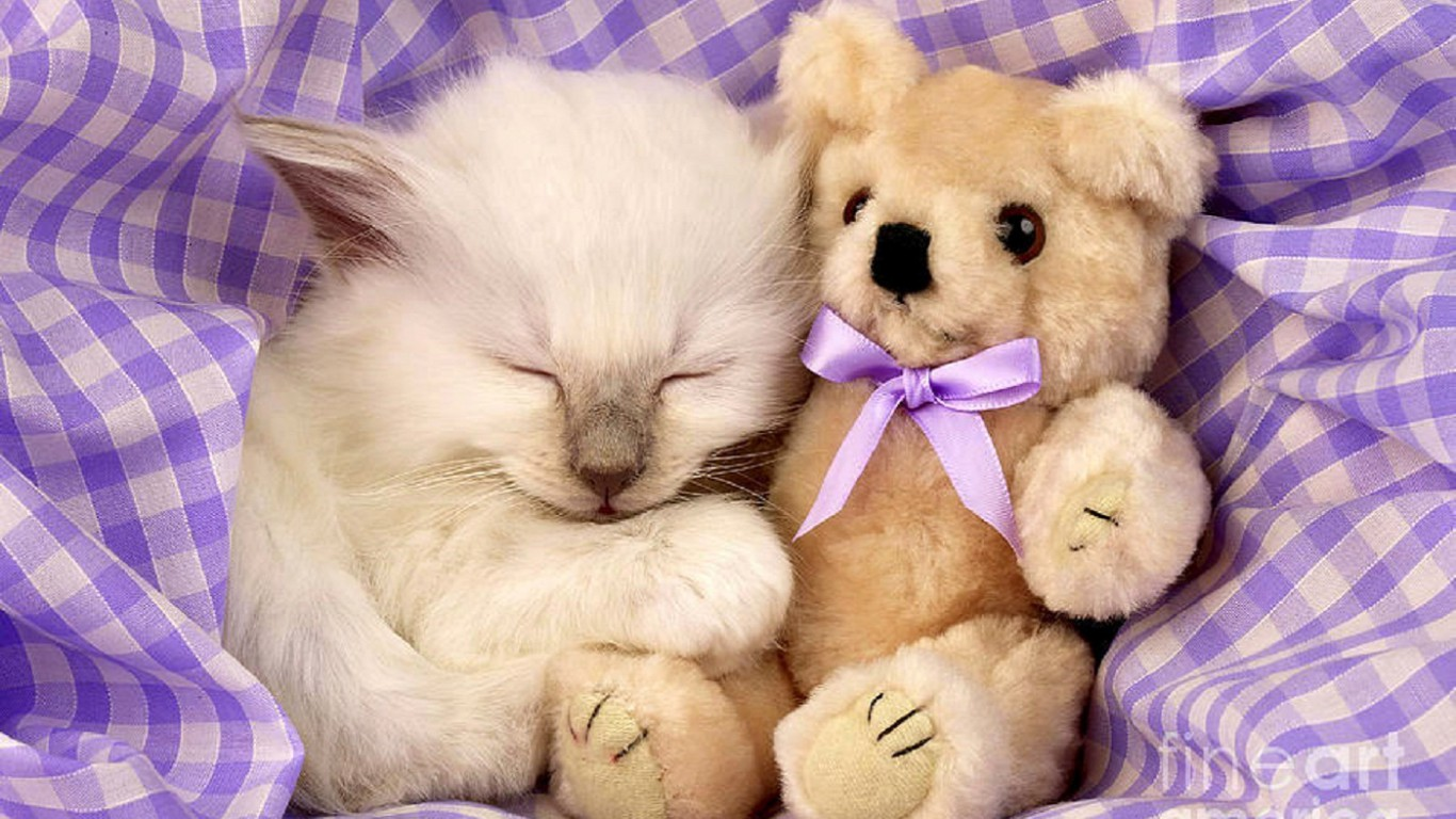 Cute Backgrounds Of Cats 2359641 Hd Wallpaper