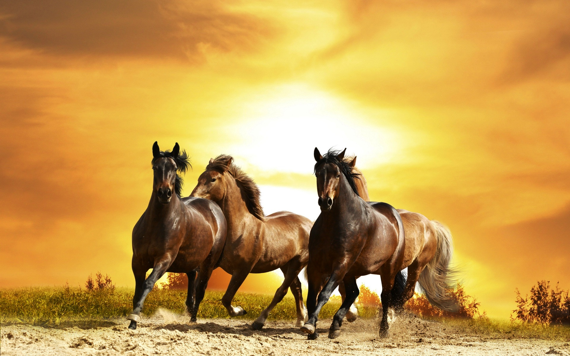 Hd Horse Running Background 2377595 Hd Wallpaper Backgrounds Download