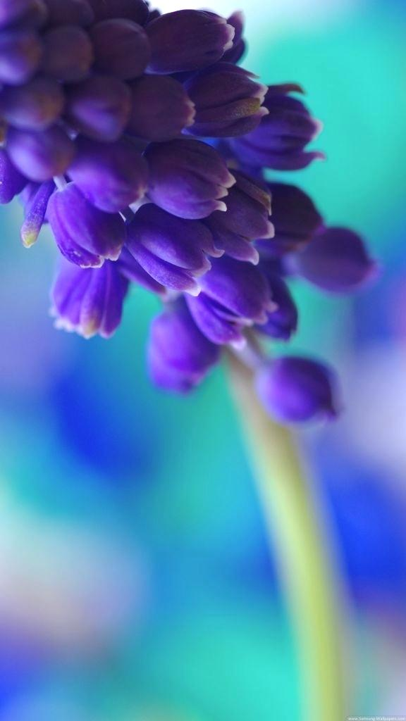 Flower Wallpaper For Lg G4 2389080 Hd Wallpaper
