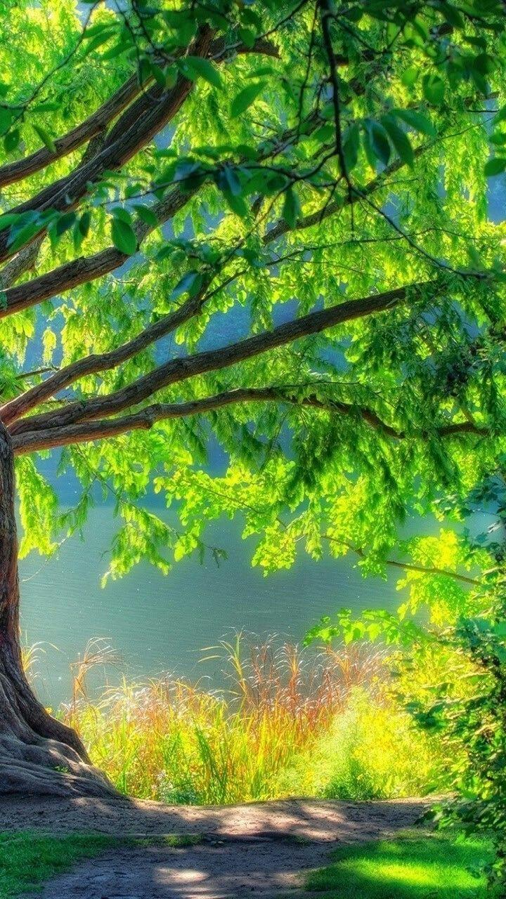Picsart Blur Nature Background Hd , HD Wallpaper & Backgrounds
