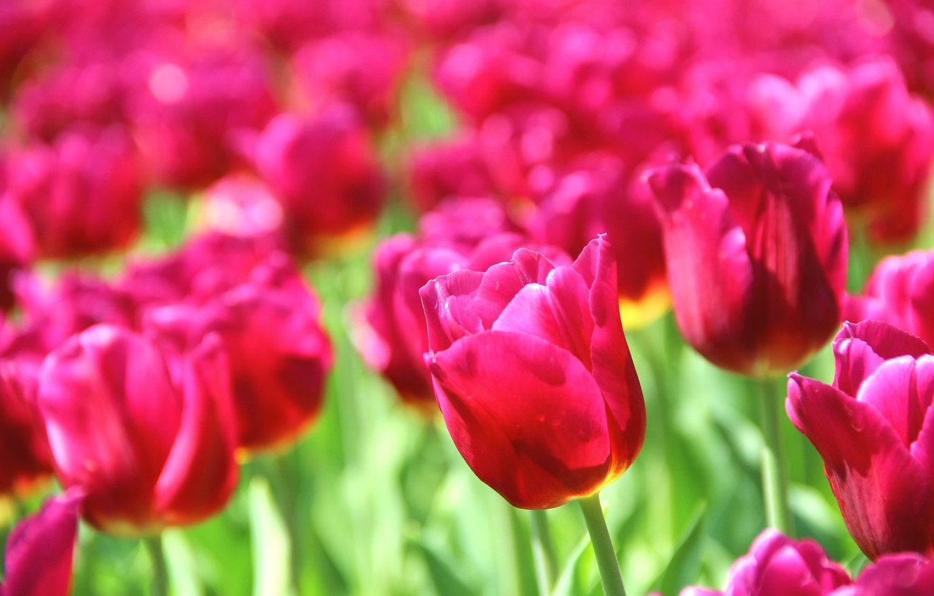 Beautiful Flowers Images Of Nature , HD Wallpaper & Backgrounds