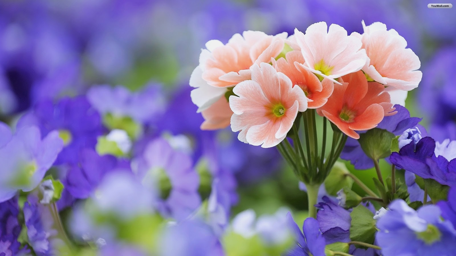 Beautiful Flowers Images Hd , HD Wallpaper & Backgrounds