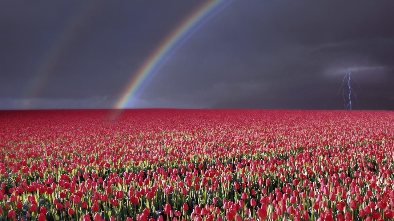Hd Wallpaper Trafalgar Law Computer Viruses Humor Funny - Rose Flower Field , HD Wallpaper & Backgrounds