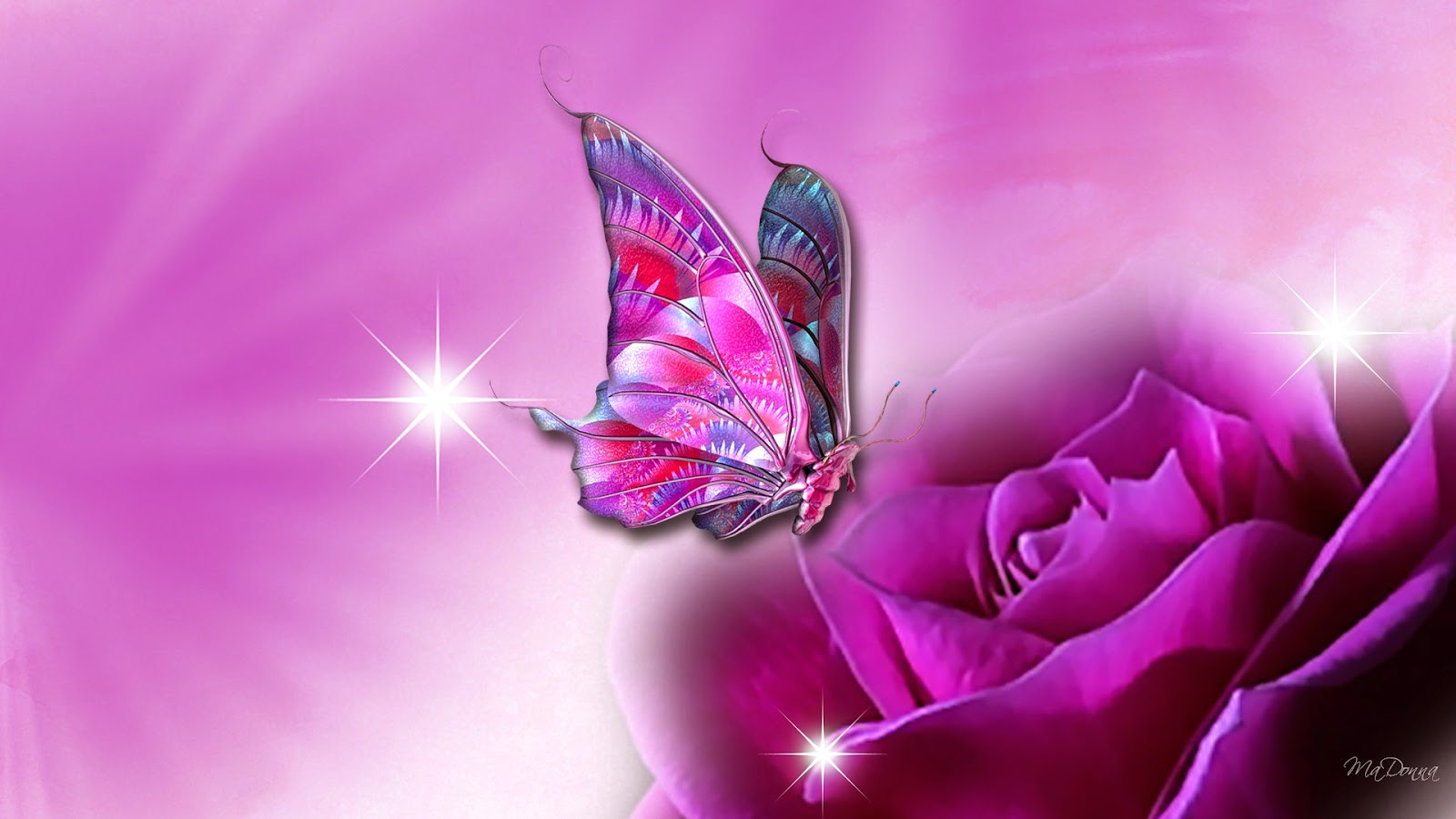 Pink Butterfly On Purple Flower Wallpaper Butterfly Wallpapers For Laptop 249157 Hd Wallpaper Backgrounds Download