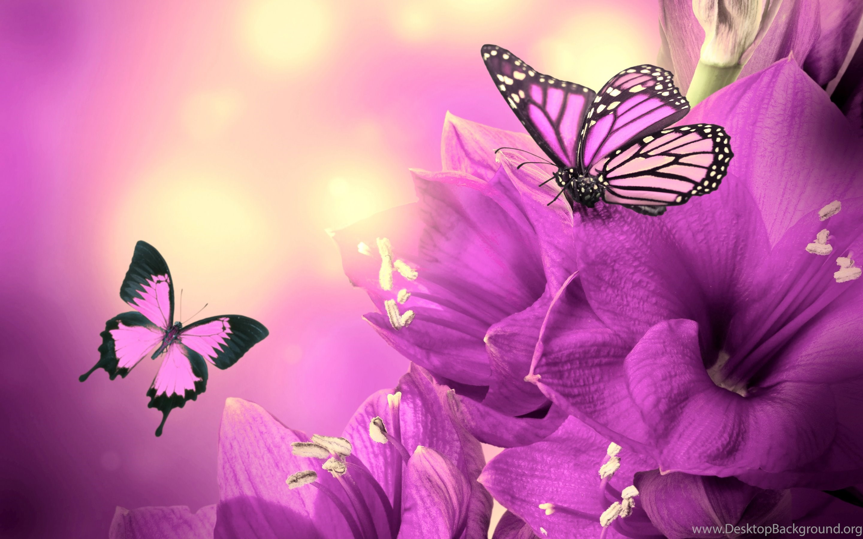 Butterfly Hd Wallpapers 1080p , HD Wallpaper & Backgrounds