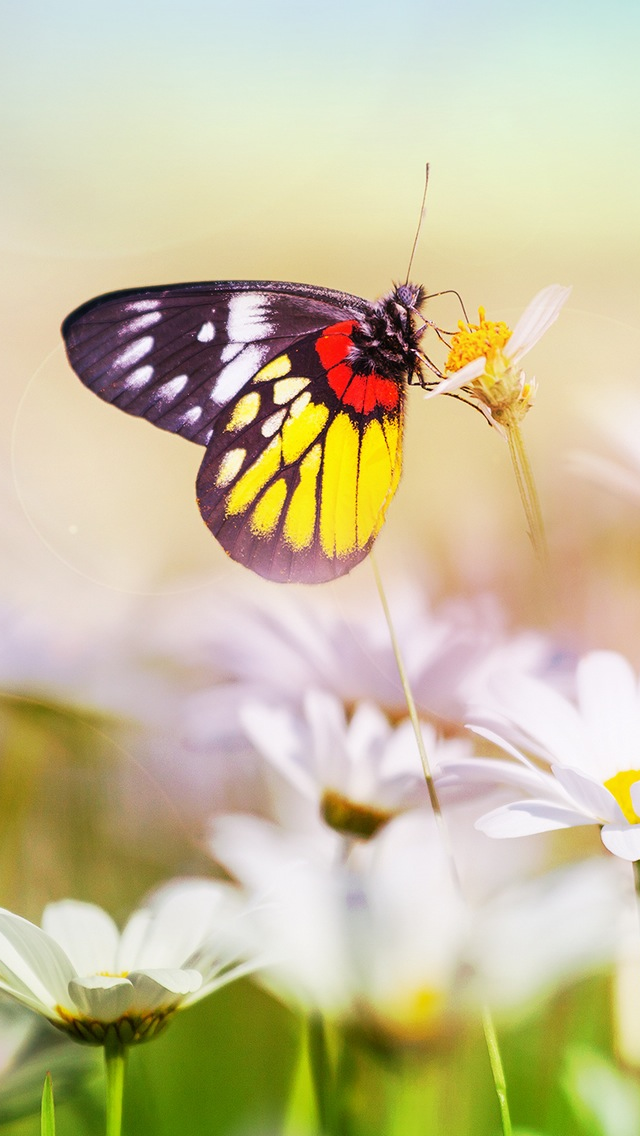 Aesthetic Butterfly On Flower Iphone Se Wallpaper - Butterflies Wallpaper Iphone 7 , HD Wallpaper & Backgrounds