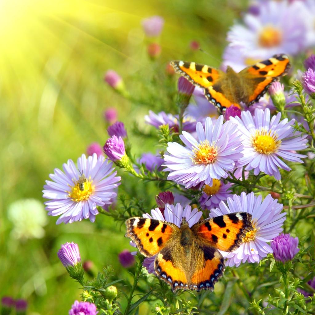 Butterfly Wallpaper With Flowers In Hd 249399 Hd Wallpaper