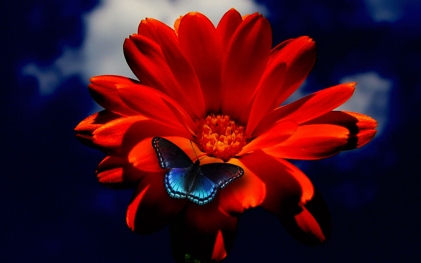 Red And Blue Flowers , HD Wallpaper & Backgrounds