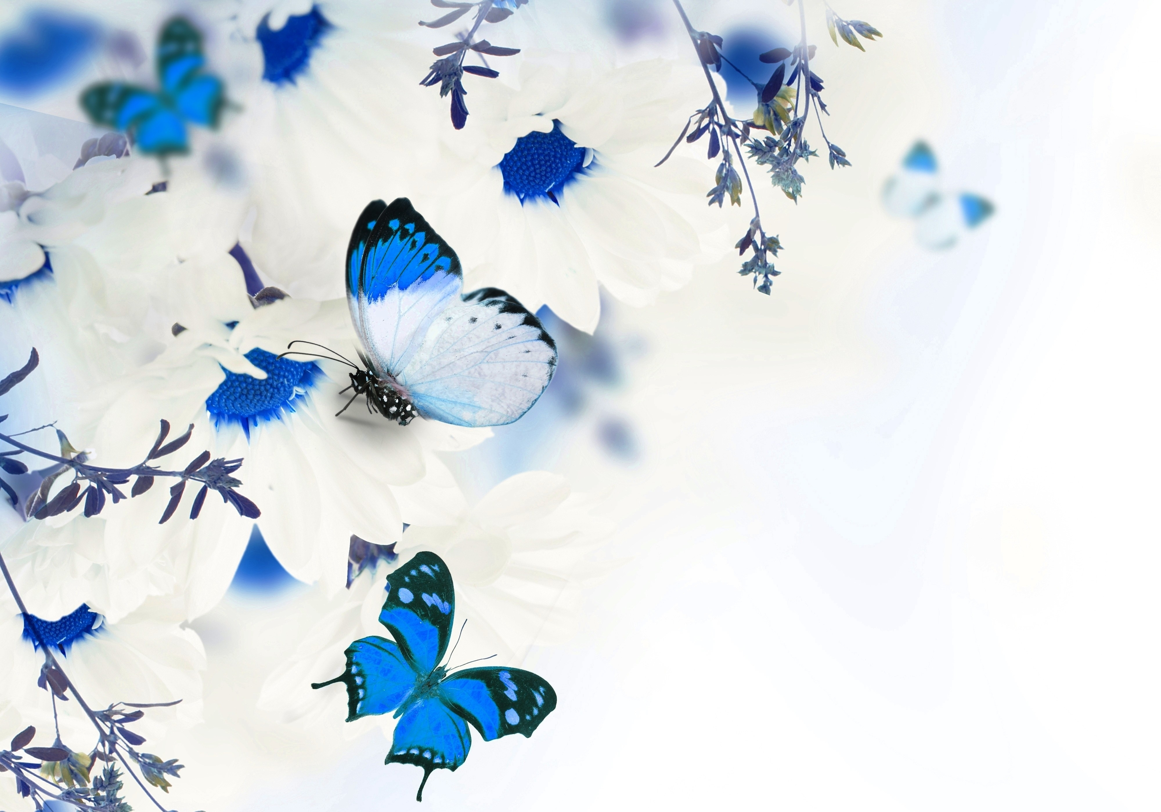 The Most Beautiful Blue Butterfly On Flower Wallpaper - Blue Butterflies And Flowers , HD Wallpaper & Backgrounds