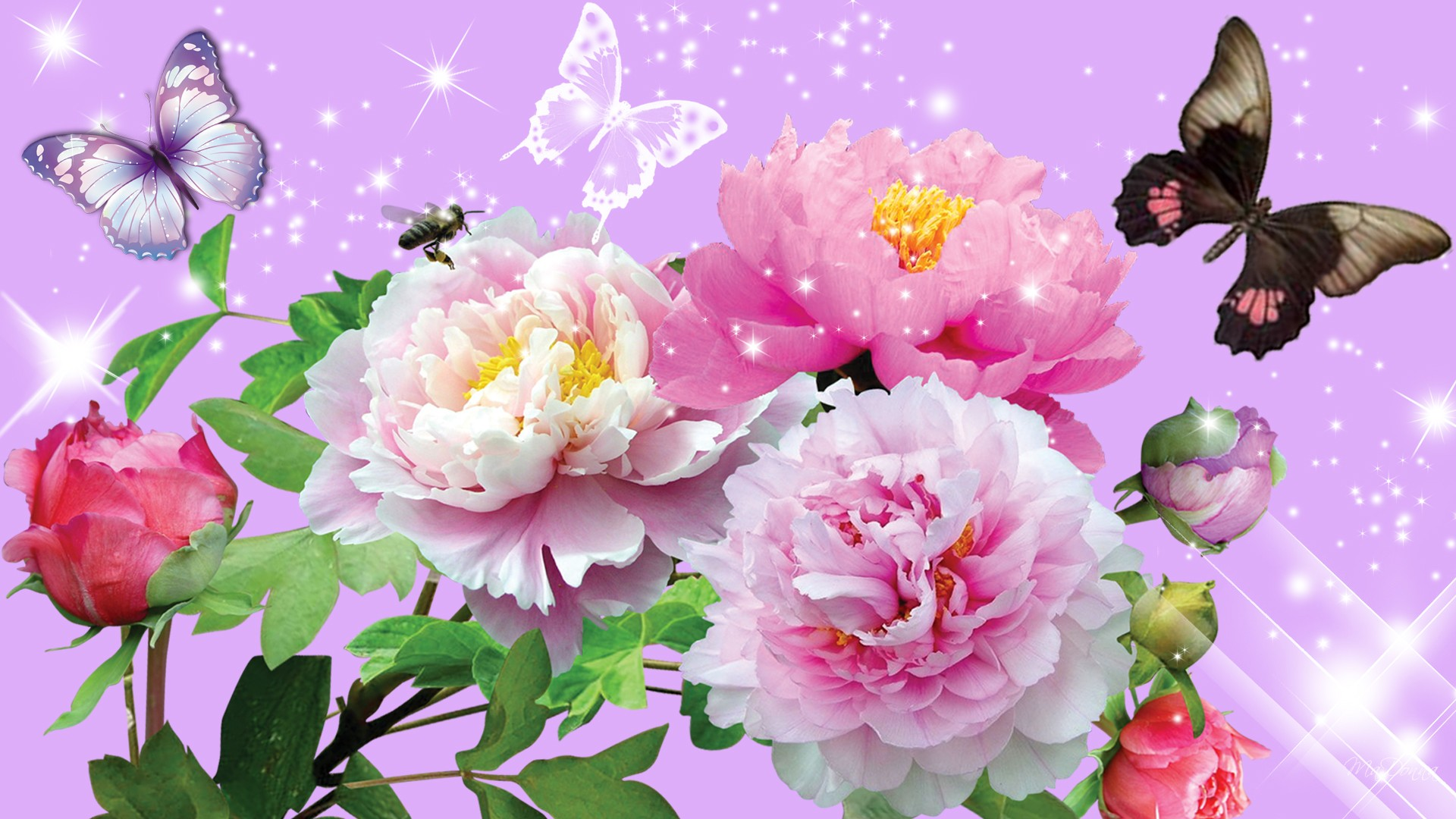 Free Wallpaper Butterflies And Flowers , HD Wallpaper & Backgrounds