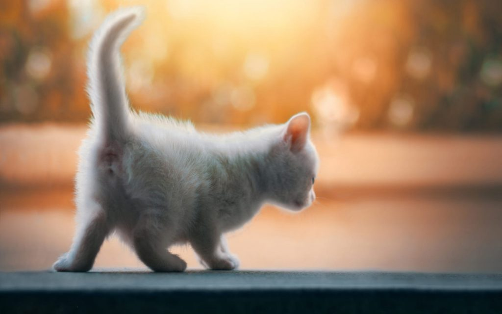 Cute Cat Wallpaper 4k Wallpaper Cat 2403607 Hd Wallpaper Backgrounds Download