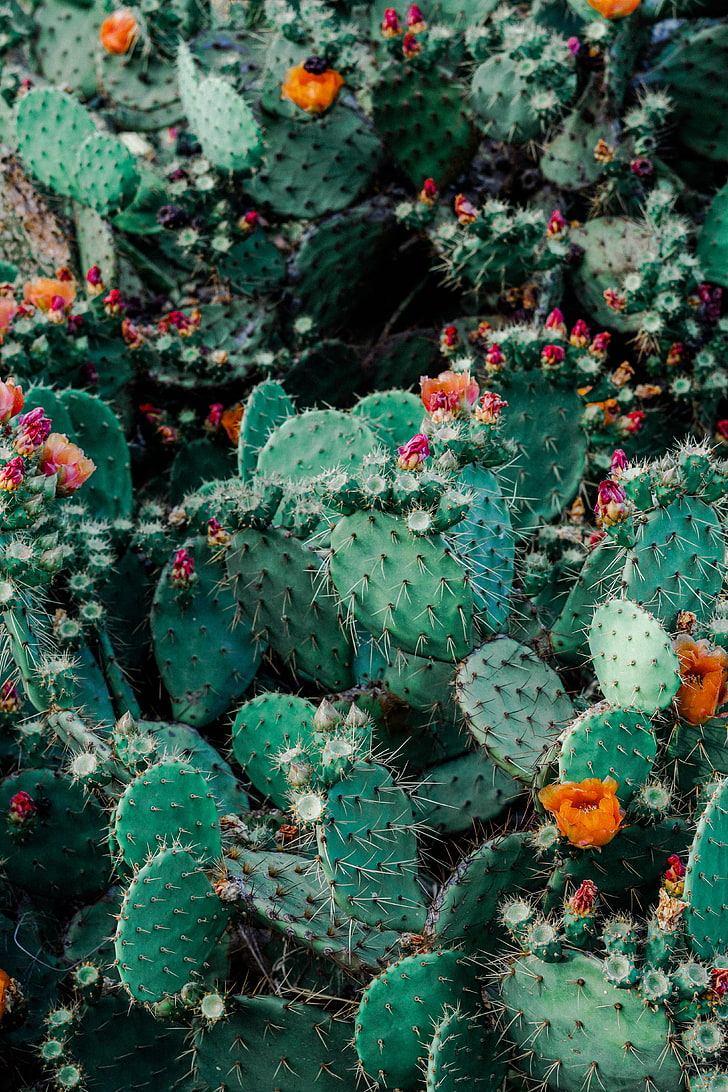 Green And Orange Cactus Cacti Succulents Thorns Cactus Flower 2406633 Hd Wallpaper Backgrounds Download