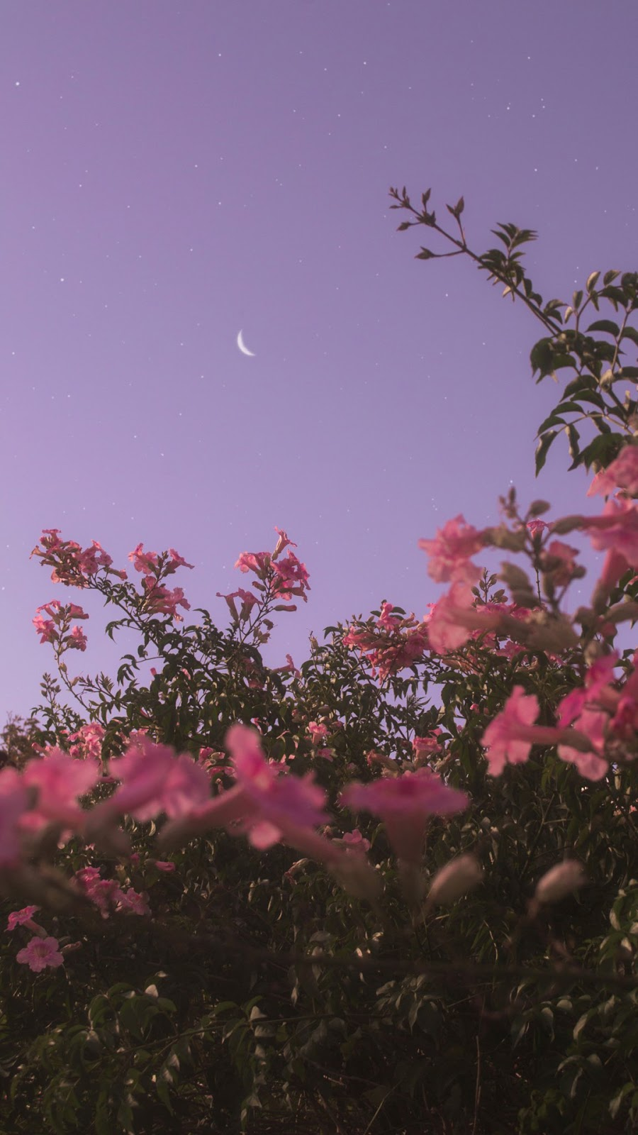 Flower Under Night Sky Flower Wallpaper Aesthetic 2408108 Hd Wallpaper Backgrounds Download