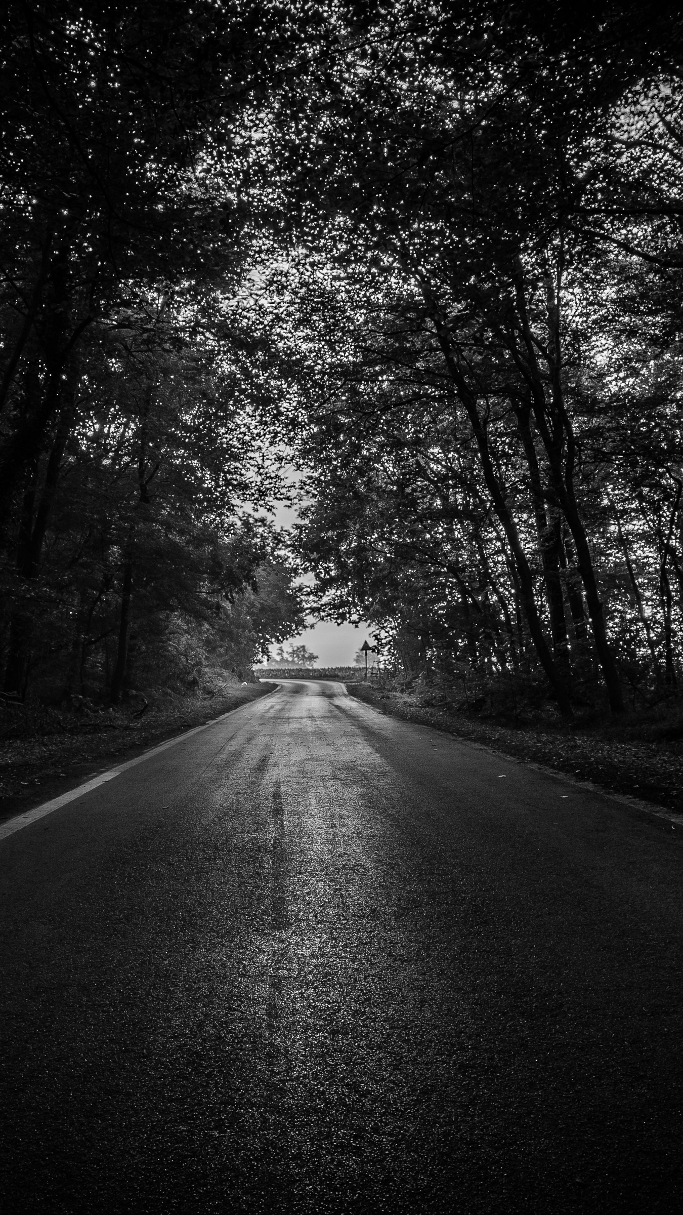 Wallpaper Road Trees Bw Dark Forest Iphone Dark Forest Wallpaper Hd 2412848 Hd Wallpaper Backgrounds Download