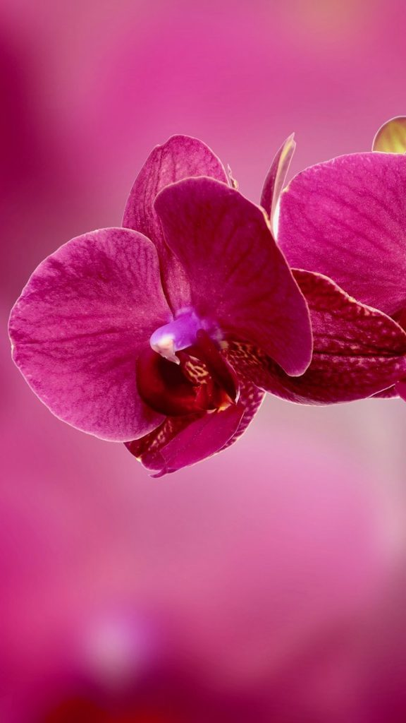 Hd Wallpaper For Samsung Flowers 2419661 Hd Wallpaper Backgrounds Download