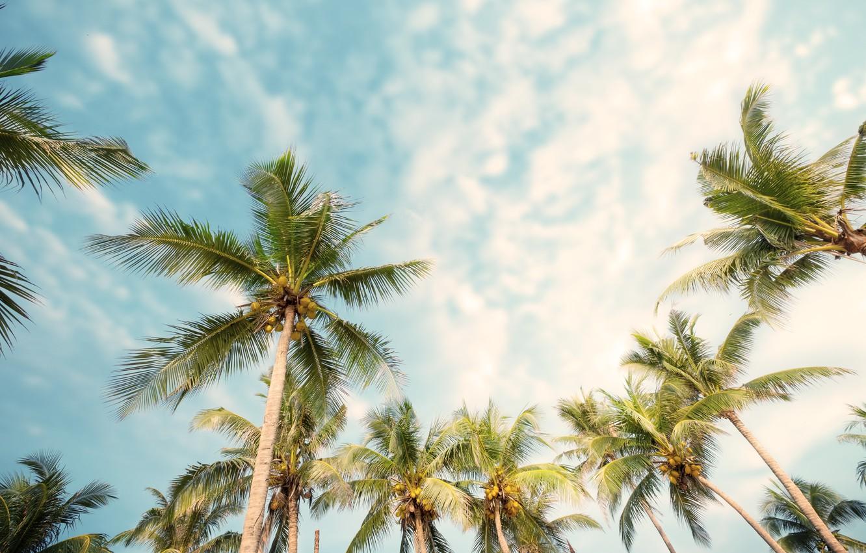 Photo Wallpaper Beach, Summer, Palm Trees, Summer, - Beach Summer Palm Trees , HD Wallpaper & Backgrounds