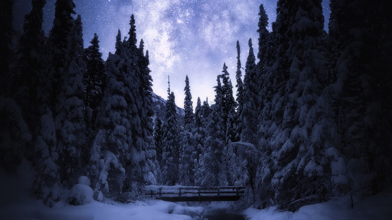 Night Sky Pine Trees , HD Wallpaper & Backgrounds