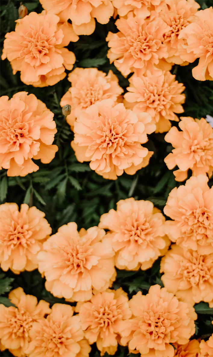 244 2441598 45 beautiful flower iphone wallpaper ideas orange peach