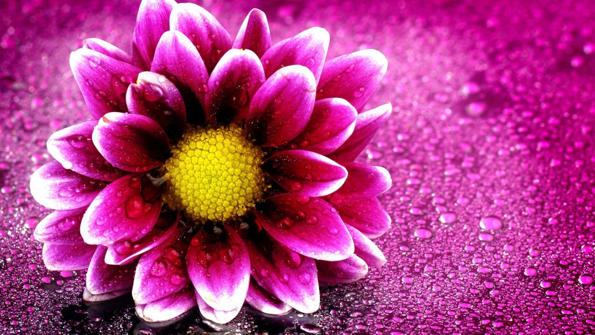 Beauty Flower Wallpaper Hd - Beautiful Flowers Wallpaper Hd , HD Wallpaper & Backgrounds