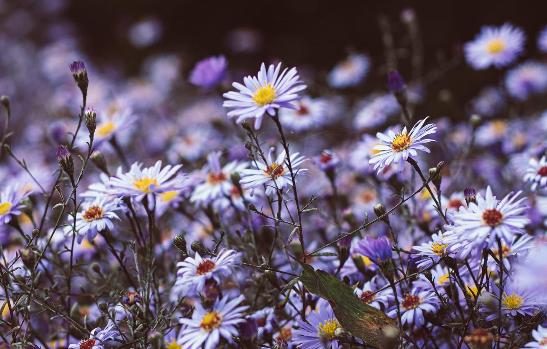 Photo Wallpaper Nature, Flowers, Purple, Plants, Wild, - Ultra Hd 4k Flower Wallpaper Roze , HD Wallpaper & Backgrounds