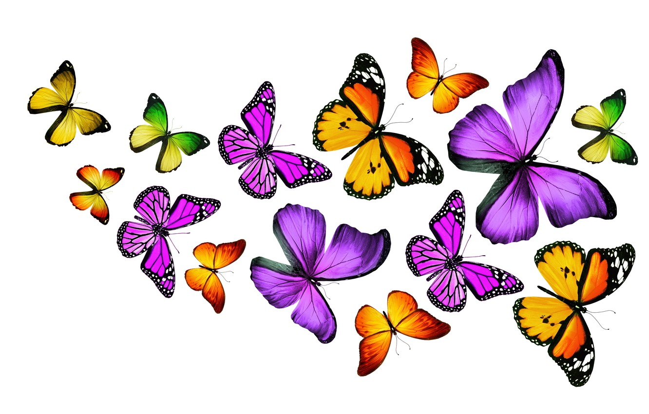 Colorful Butterfly Download Wallpaper Butterfly , HD Wallpaper & Backgrounds