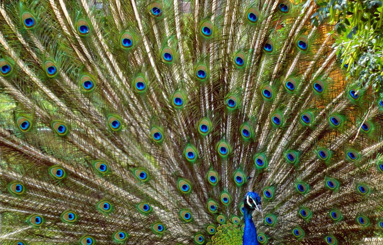 Photo Wallpaper Widescreen, Bird, Wallpaper, Wallpaper, - Bird Widescreen Background , HD Wallpaper & Backgrounds