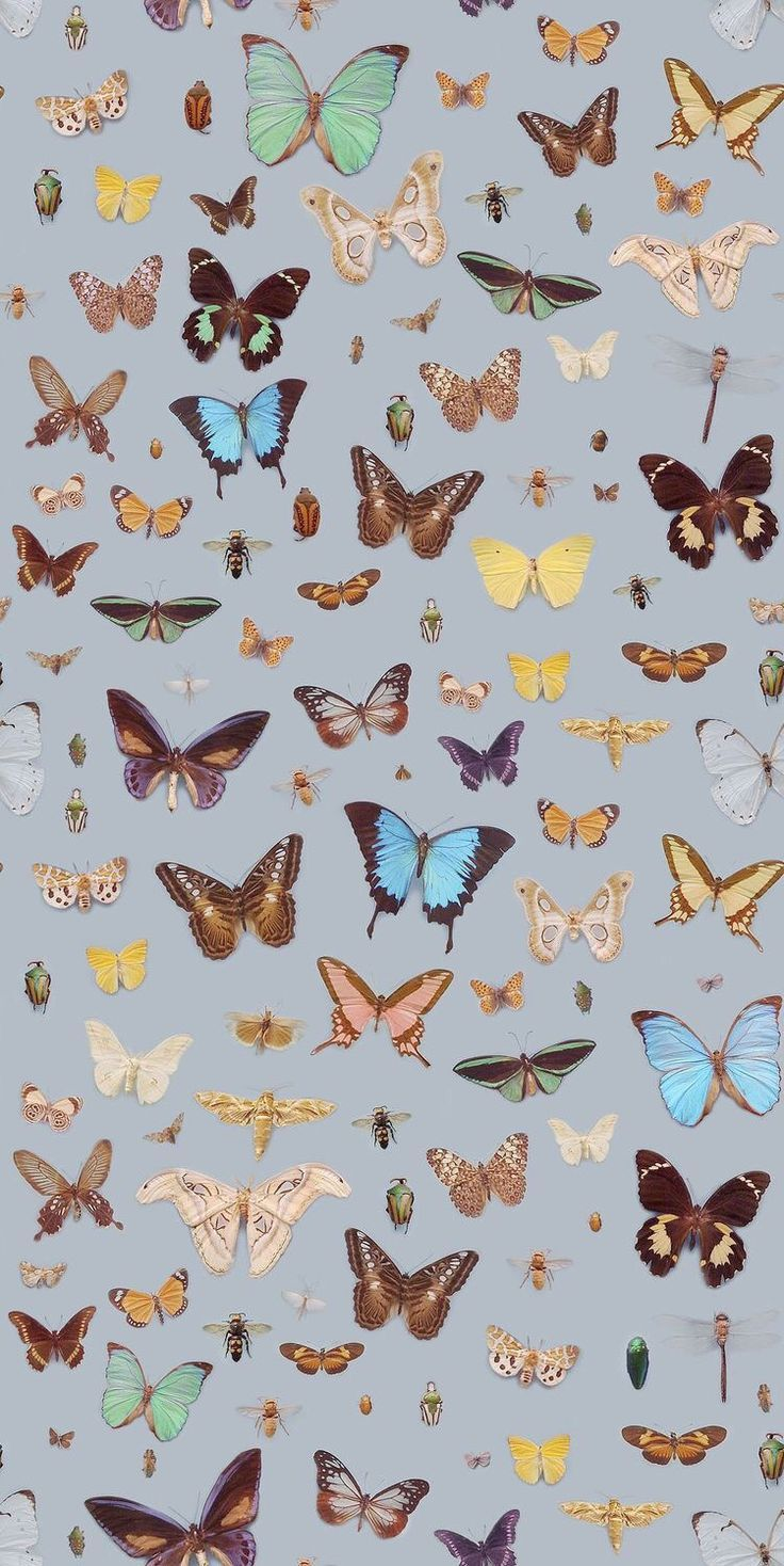 Butterfly Iphone Wallpaper Aesthetic 2474994 Hd Wallpaper Backgrounds Download