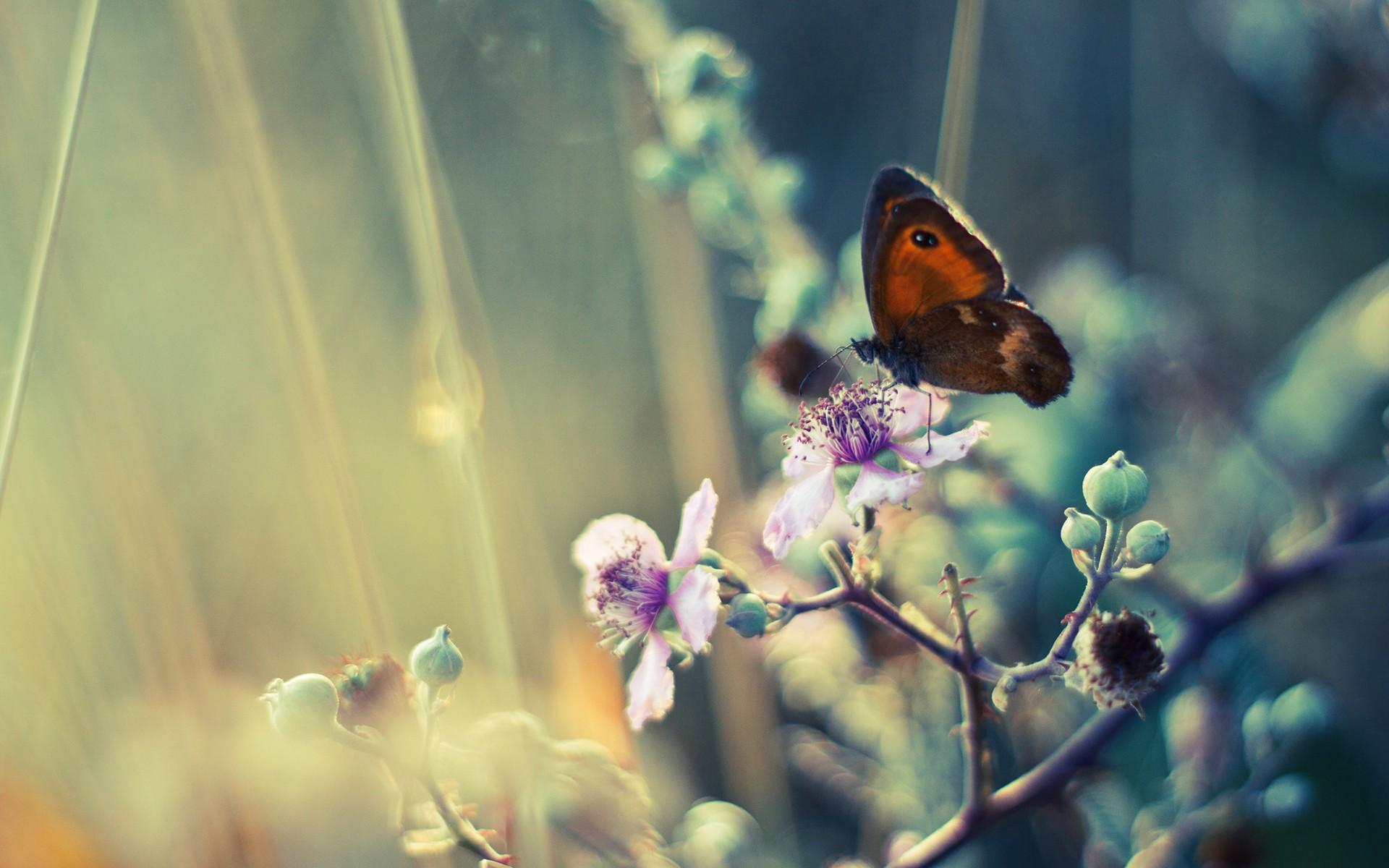 #animals, #plants, #insect, #depth Of Field, #butterfly, - Todo Momento Estamos Dejando De Ser , HD Wallpaper & Backgrounds