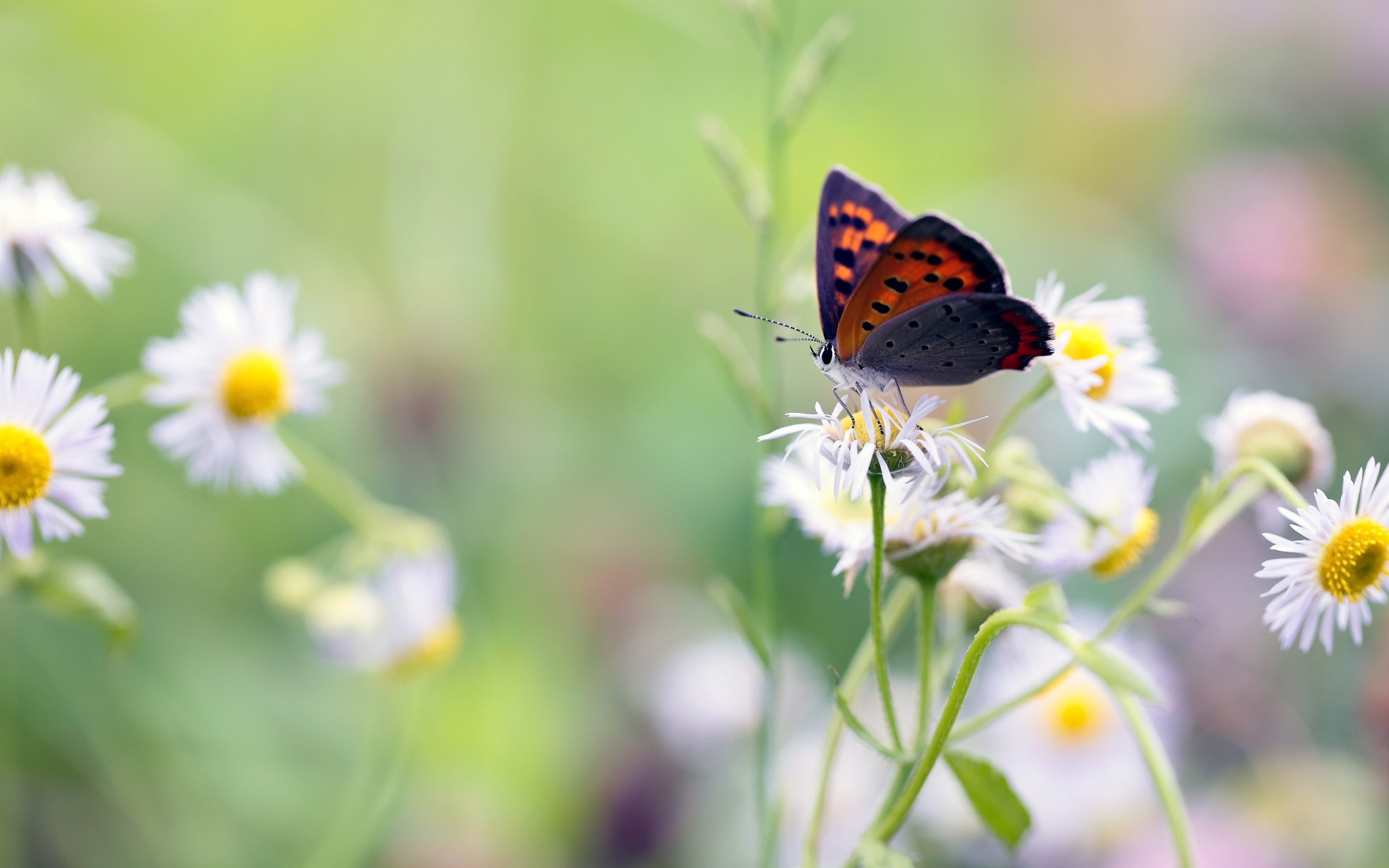 Butterfly Flowers Background - Whatsapp Good Morning Live , HD Wallpaper & Backgrounds