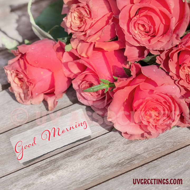 Bunch Of Peach Roses On Bench - Gud Morning Wishes With Beautiful Flowers , HD Wallpaper & Backgrounds