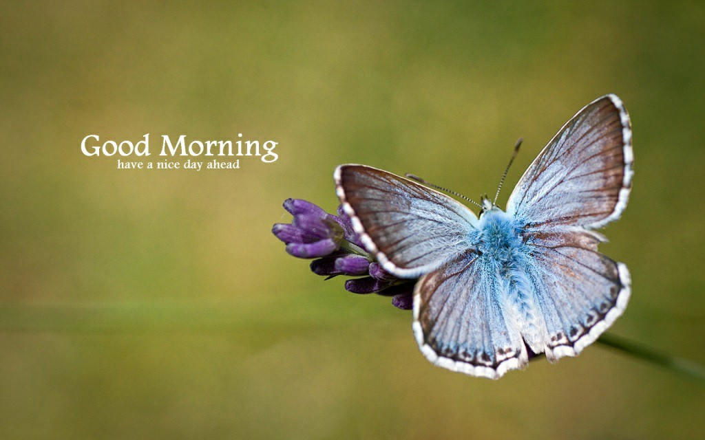 Beautiful Good Morning Images Hd , HD Wallpaper & Backgrounds