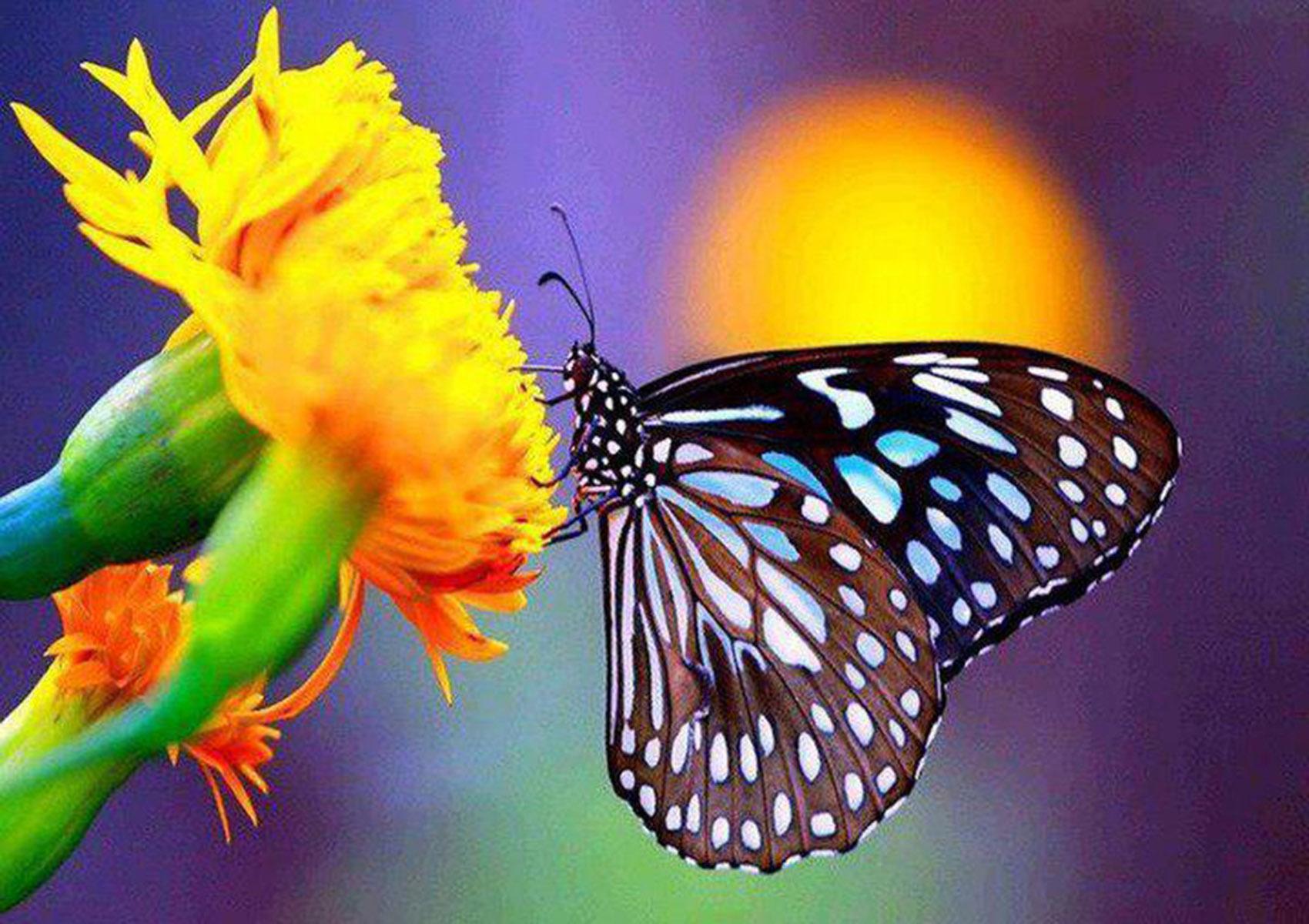 Butterfly On A Flower Wallpapers - Butterfly , HD Wallpaper & Backgrounds