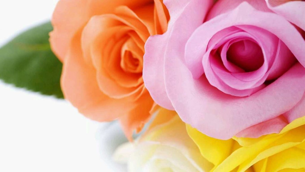 Most Beautiful Flowers Wallpapers , HD Wallpaper & Backgrounds