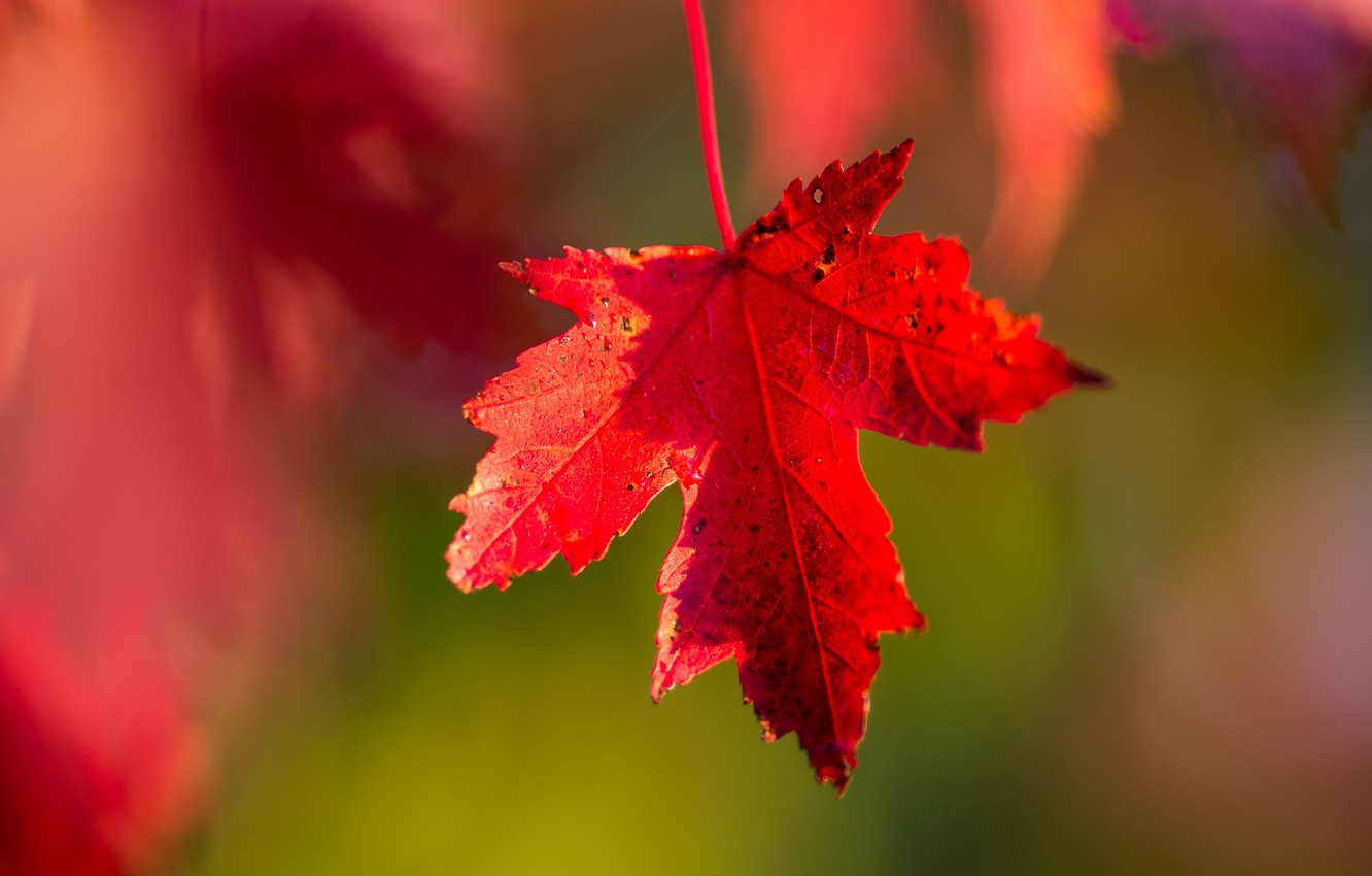 Photo Wallpaper Wallpaper, Red, Nature, Autumn, Macro, - Blur Red Nature Background Hd , HD Wallpaper & Backgrounds