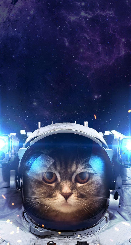 Astronaut Cat , HD Wallpaper & Backgrounds