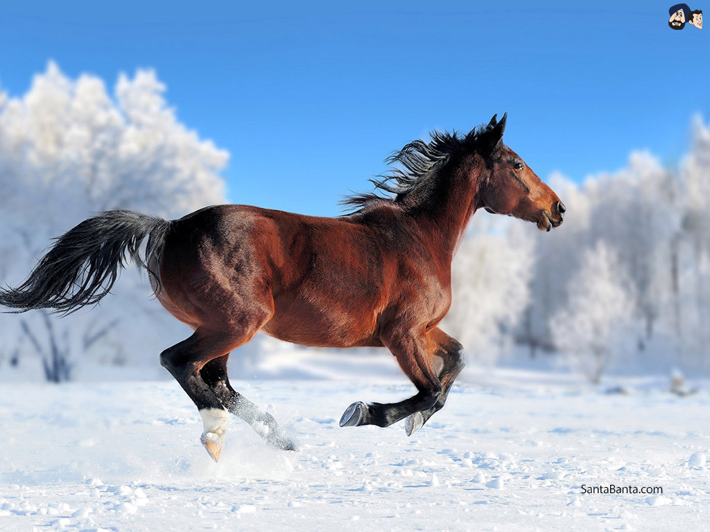 Winter Horse Photography 2533992 Hd Wallpaper Backgrounds Download
