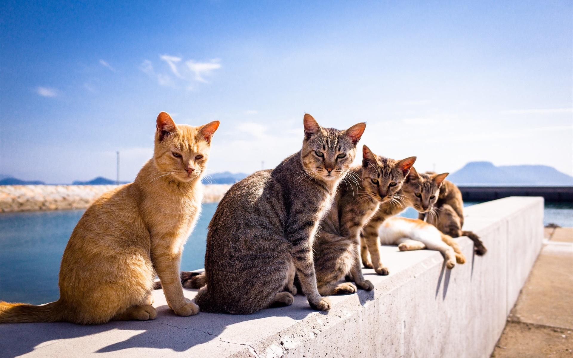 Wallpaper Summer, Cats, Sunshine - Eye Relaxing Wallpaper Hd , HD Wallpaper & Backgrounds